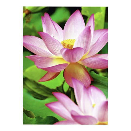 2482-20 4004182410103 Paper Photo Premium 300g Water Lily part